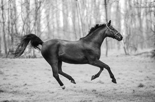 horse_wildlife_photography_13.jpg