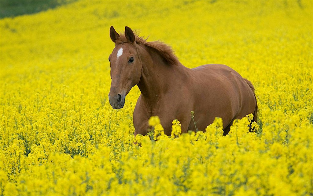 horse_wildlife_photography_20.jpg