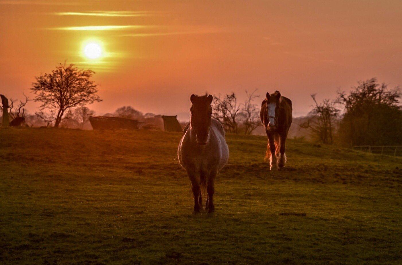 horse_wildlife_photography_22.jpg