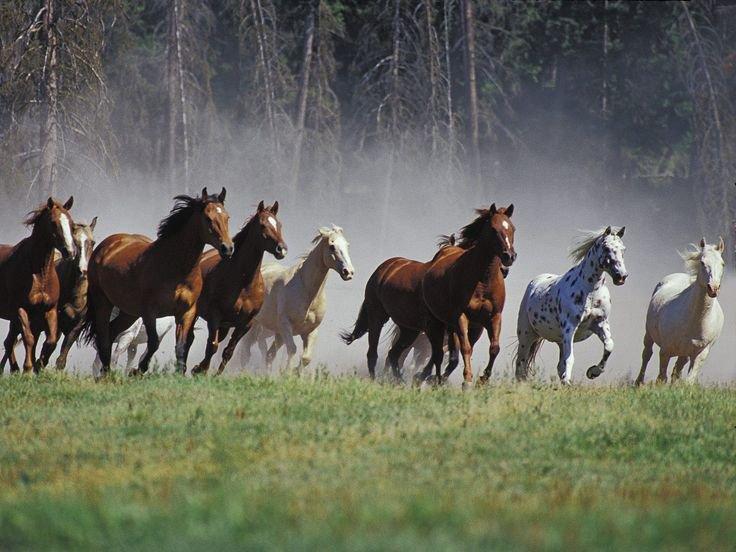 horse_wildlife_photography_26.jpg