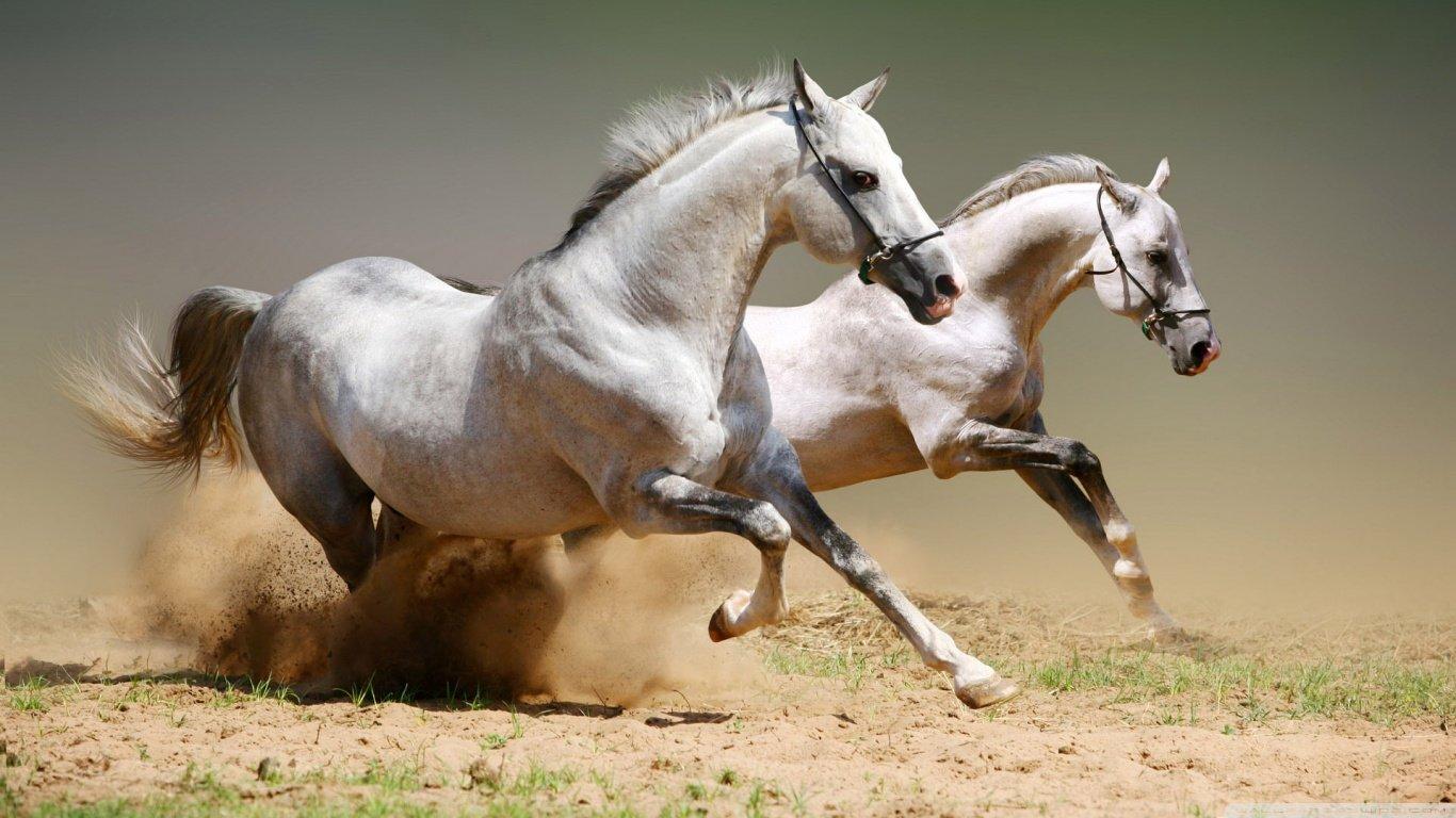 horse_wildlife_photography_29.jpg