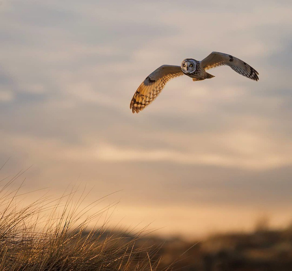 wildlife_photography_2.jpg