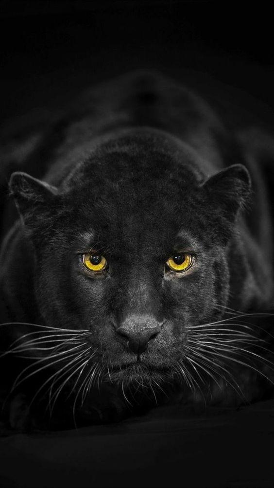 wildlife_photography_24.jpg