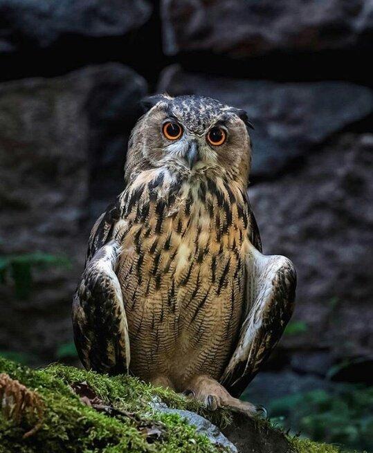 wildlife_photography_1.jpg