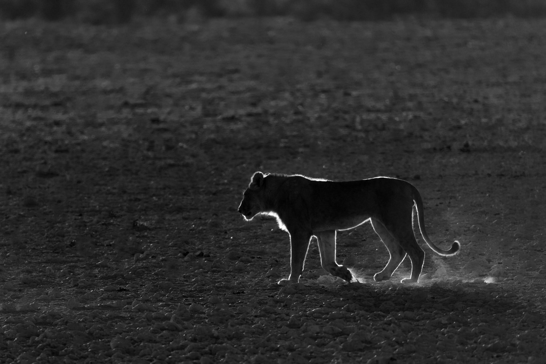 wildlife_photography_4.jpg