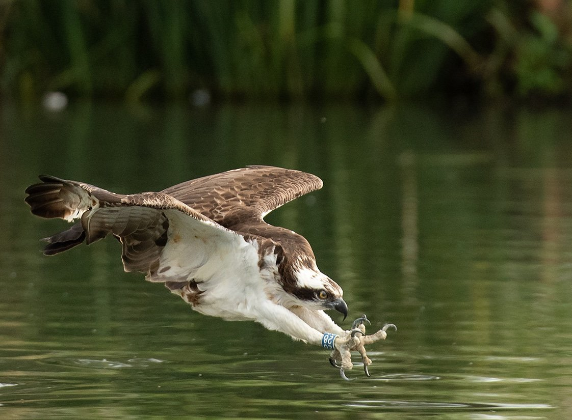wildlife_photography_5.jpg