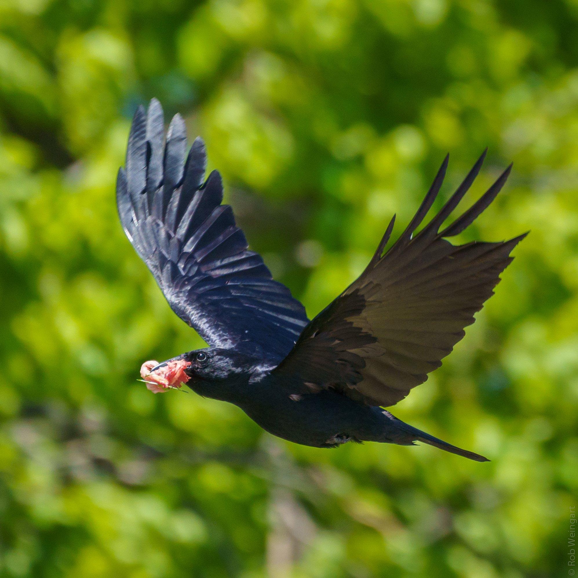 wildlife_photography_6.jpg