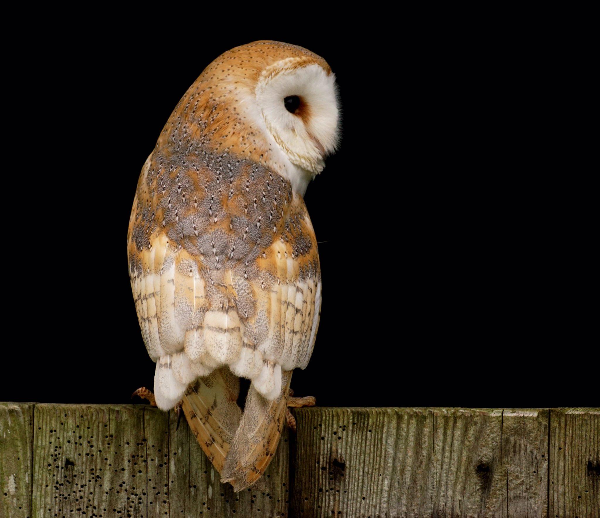 wildlife_photography_9.jpg