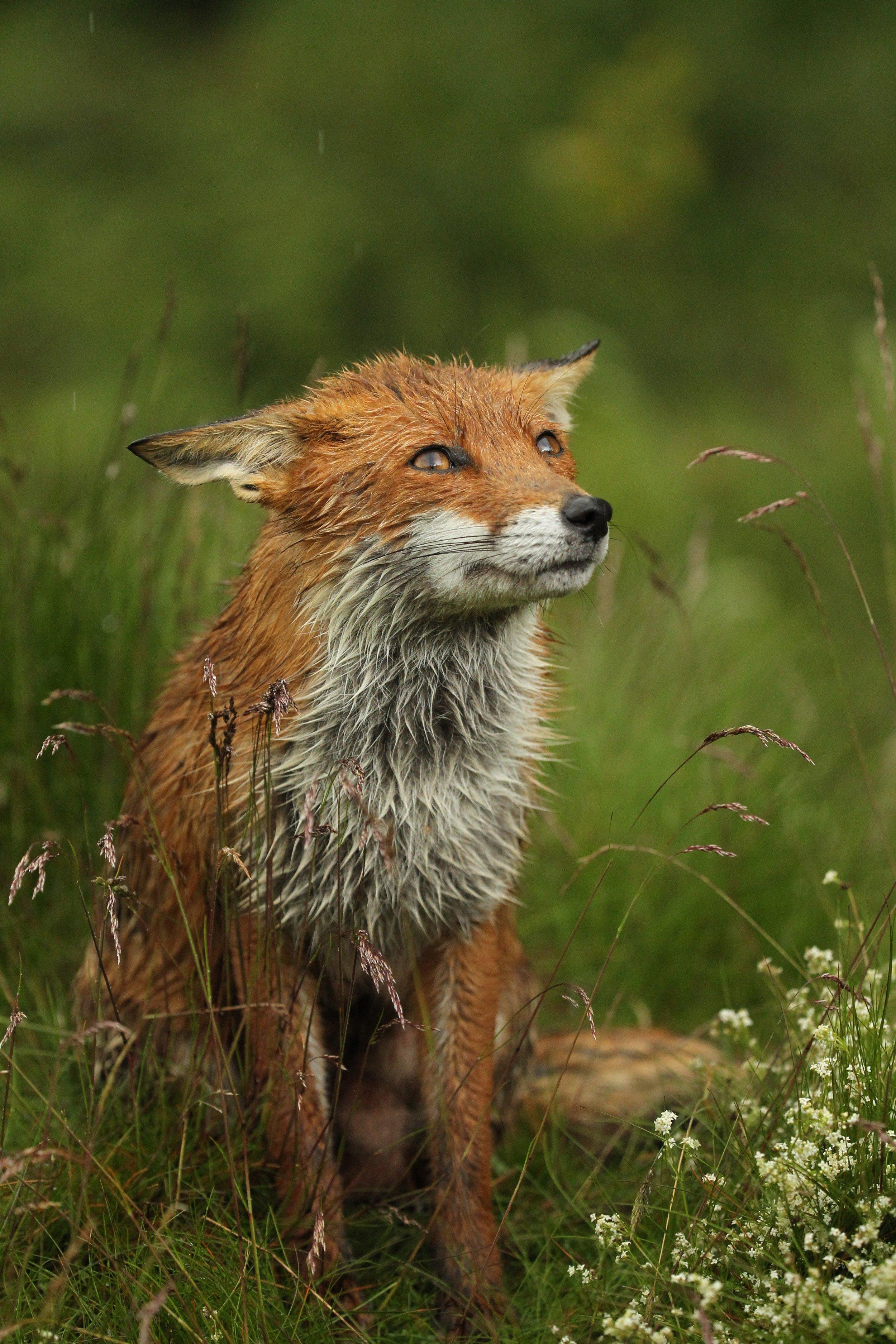 wildlife_photography_7.jpg