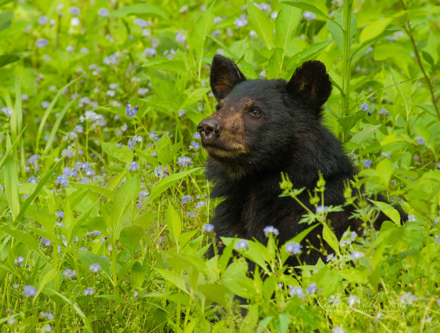 wildlife_photography_17.jpg