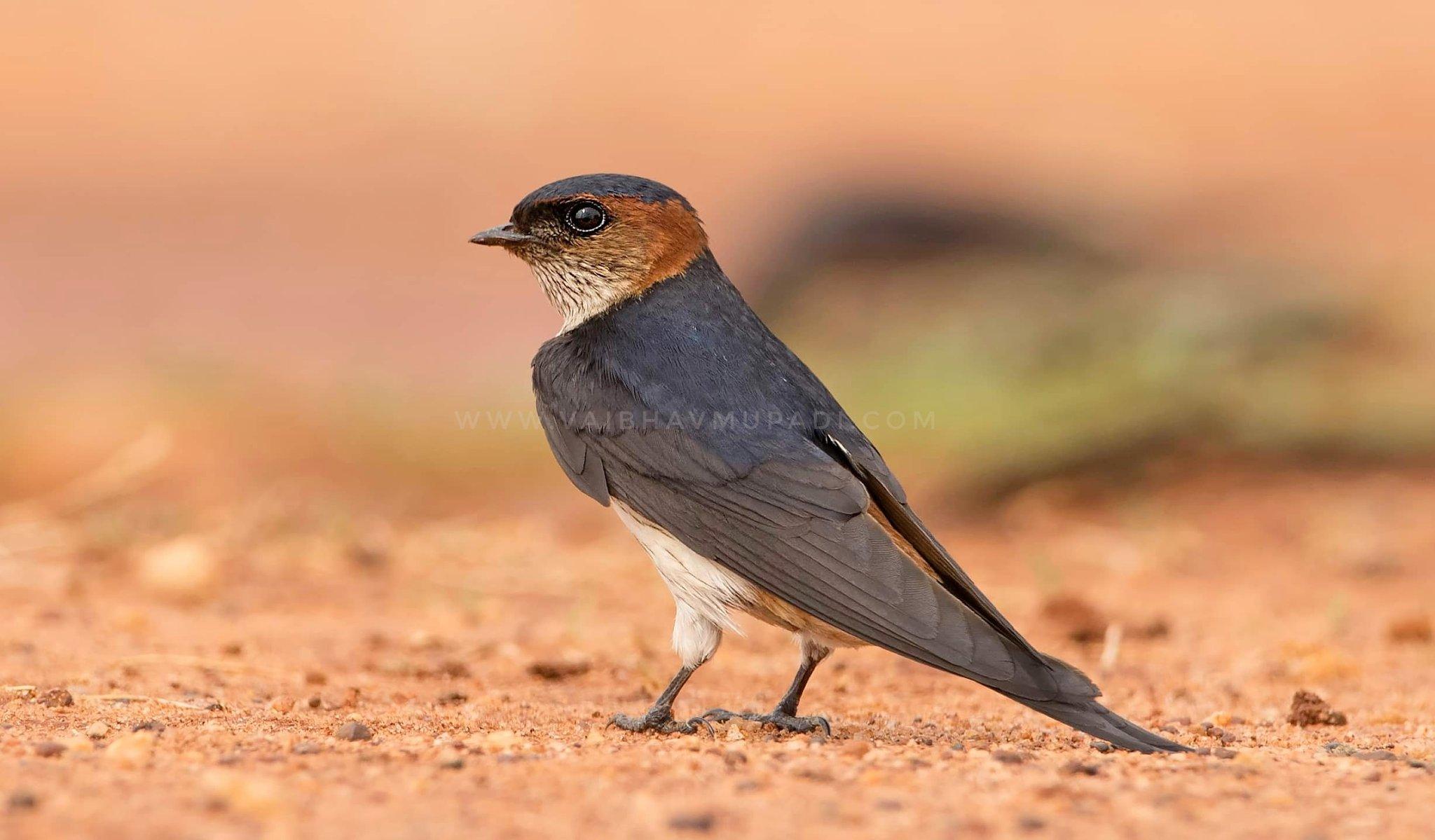 wildlife_photography_18.jpg
