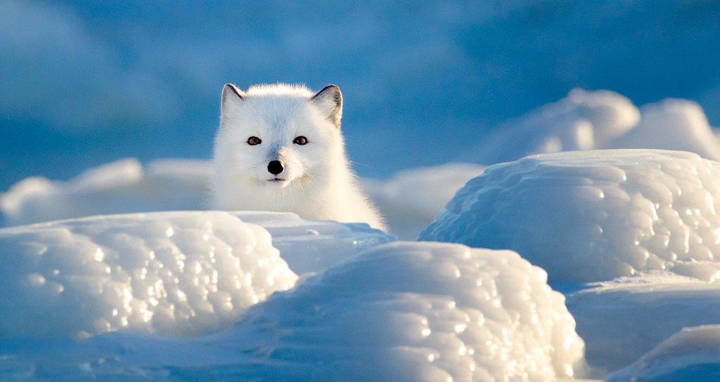 wildlife_photography_21.jpg