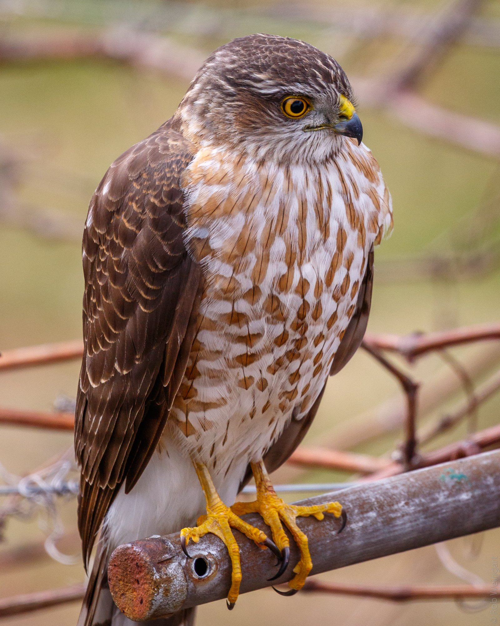wildlife_photography_19.jpg