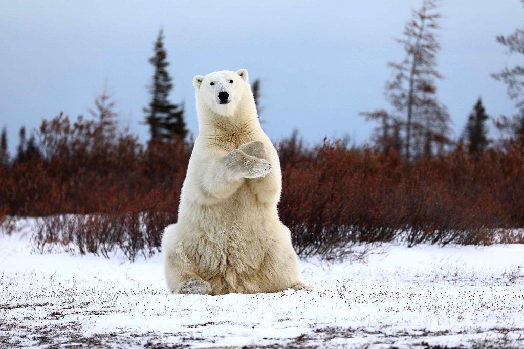 wildlife_photography_22.jpg