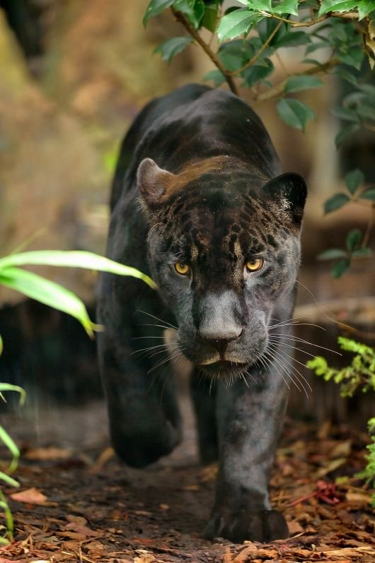 wildlife_photography_26.jpg