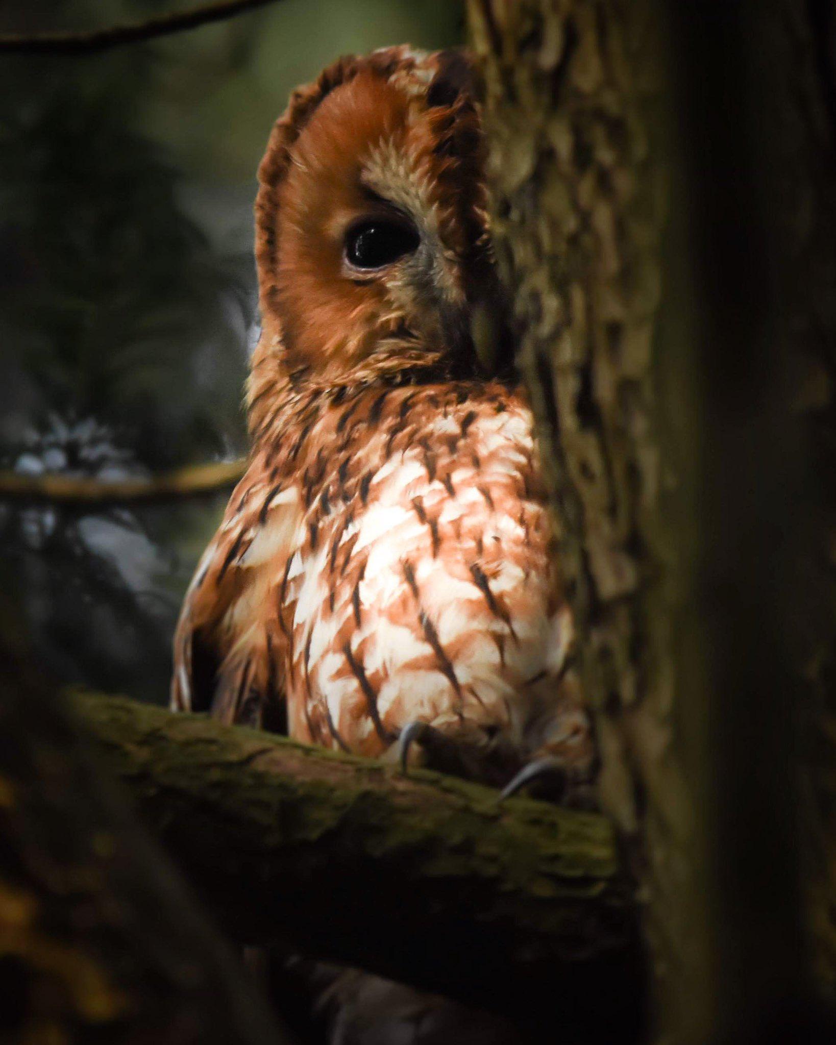 wildlife_photography_30.jpg