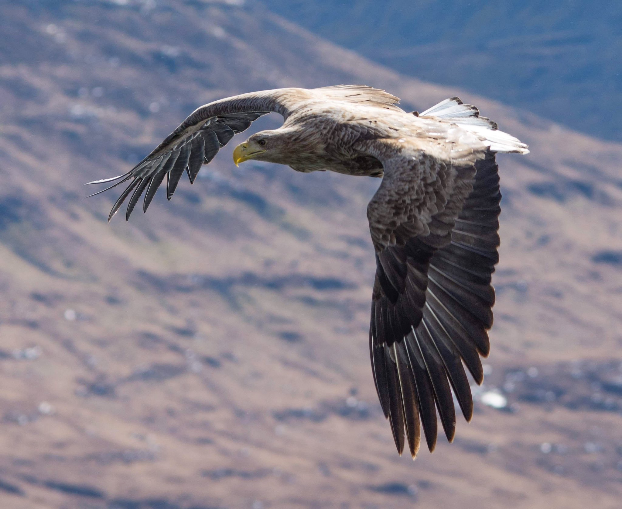 wildlife_photography_34.jpg