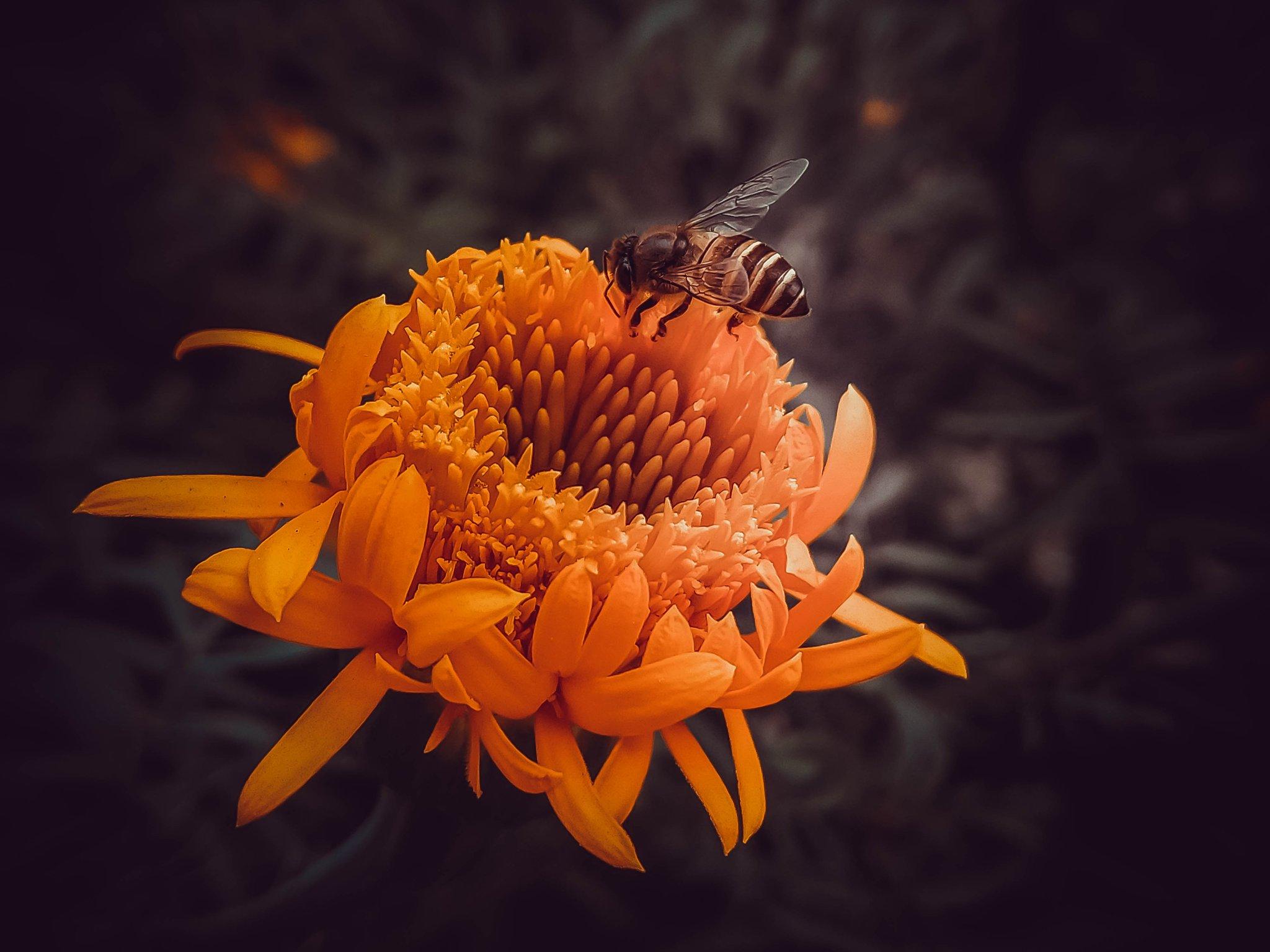 macro_photography_30.jpg