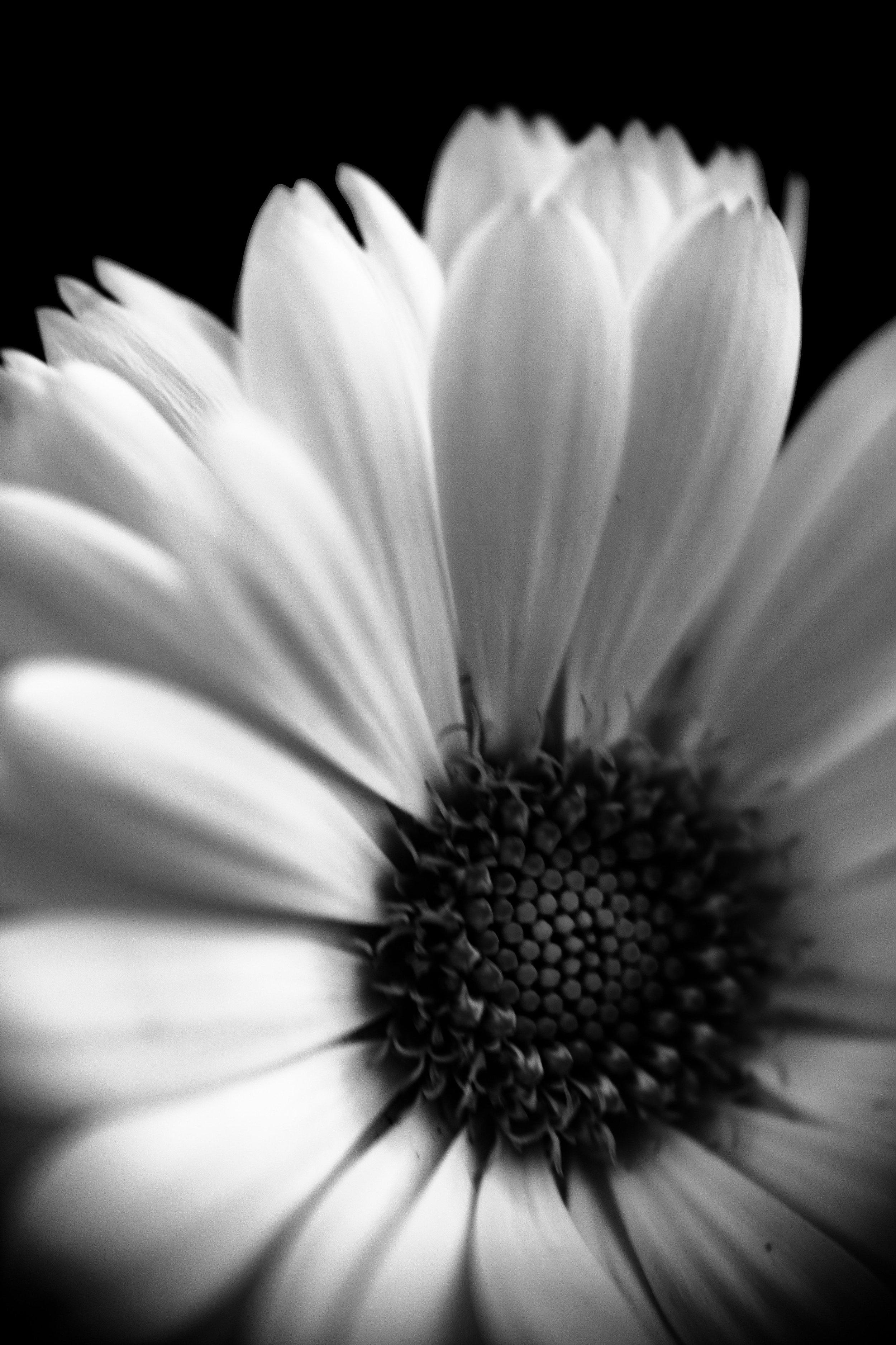 macro_photography_31.jpg