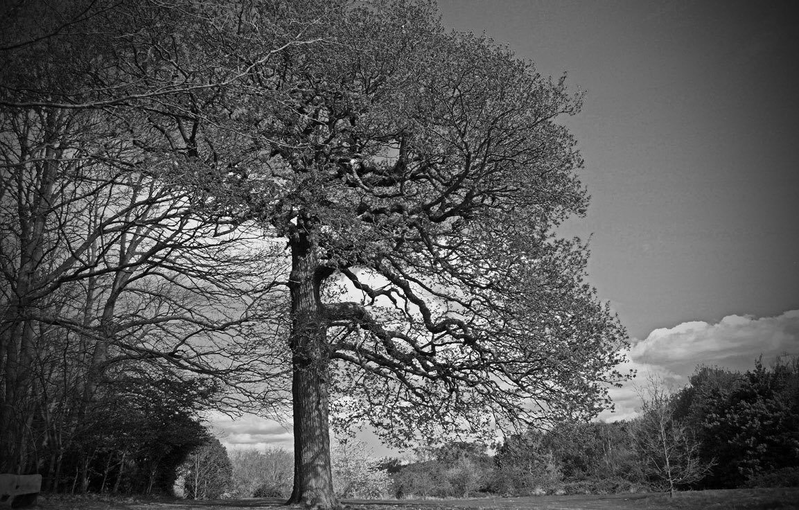 black_and_white_landscape_photography_6.jpg