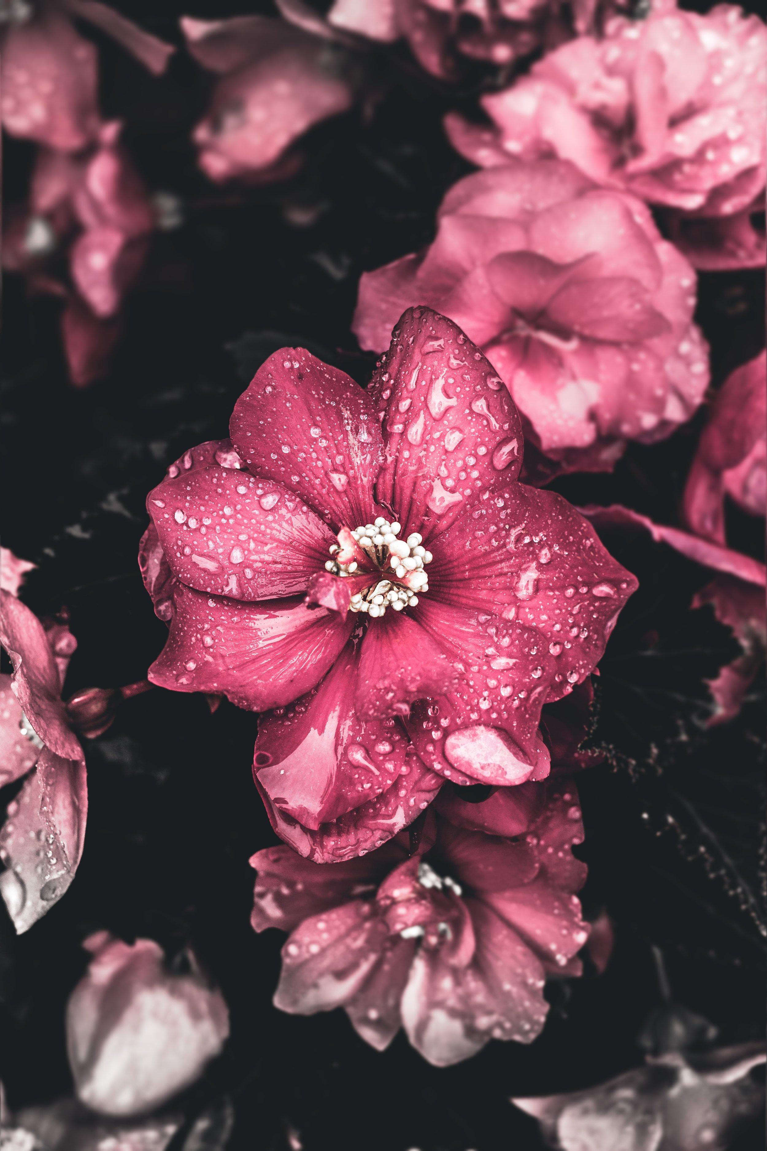 beautiful-beautiful-flowers-blooming-2251822.jpg
