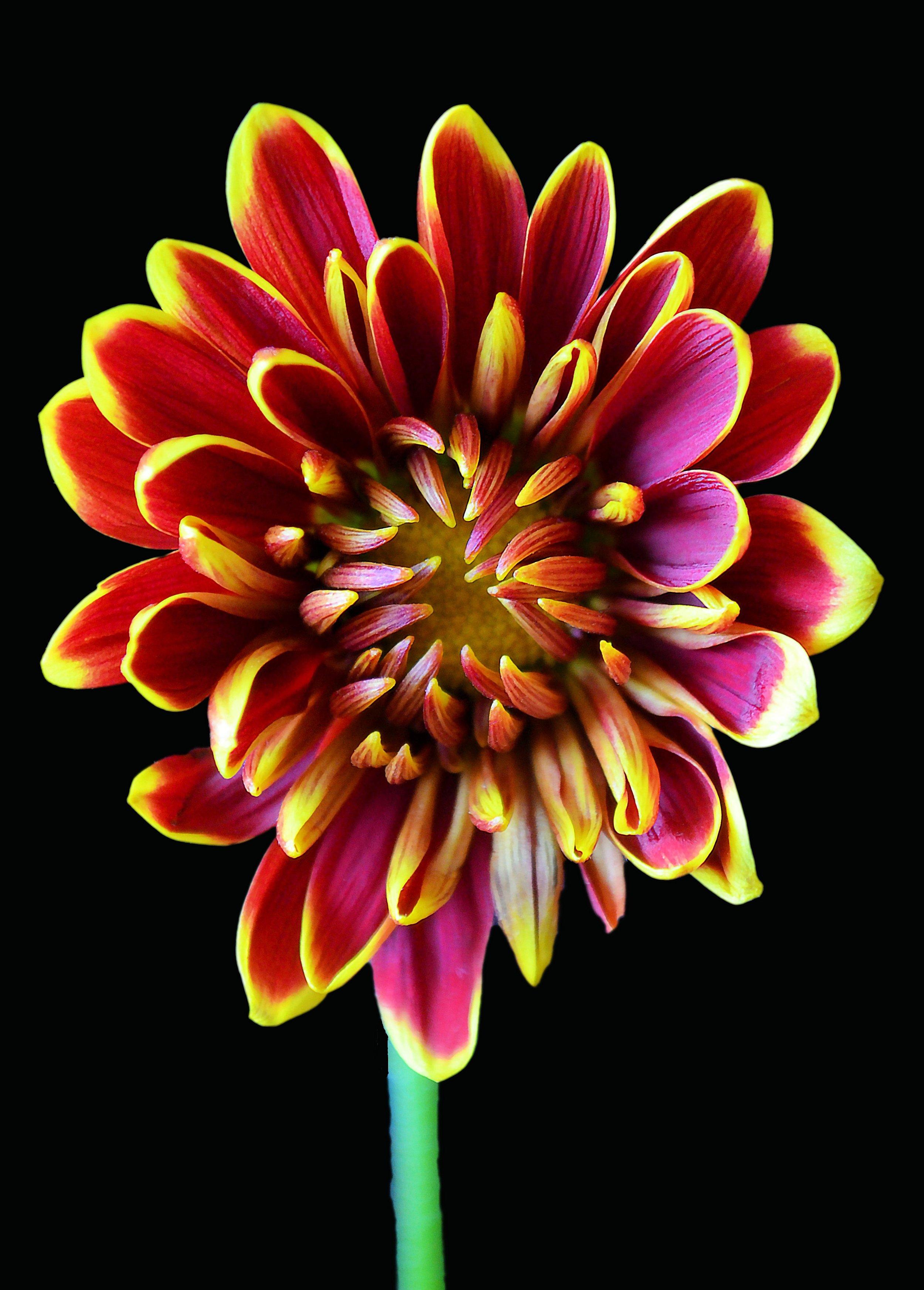 beautiful-bloom-blooming-371466.jpg