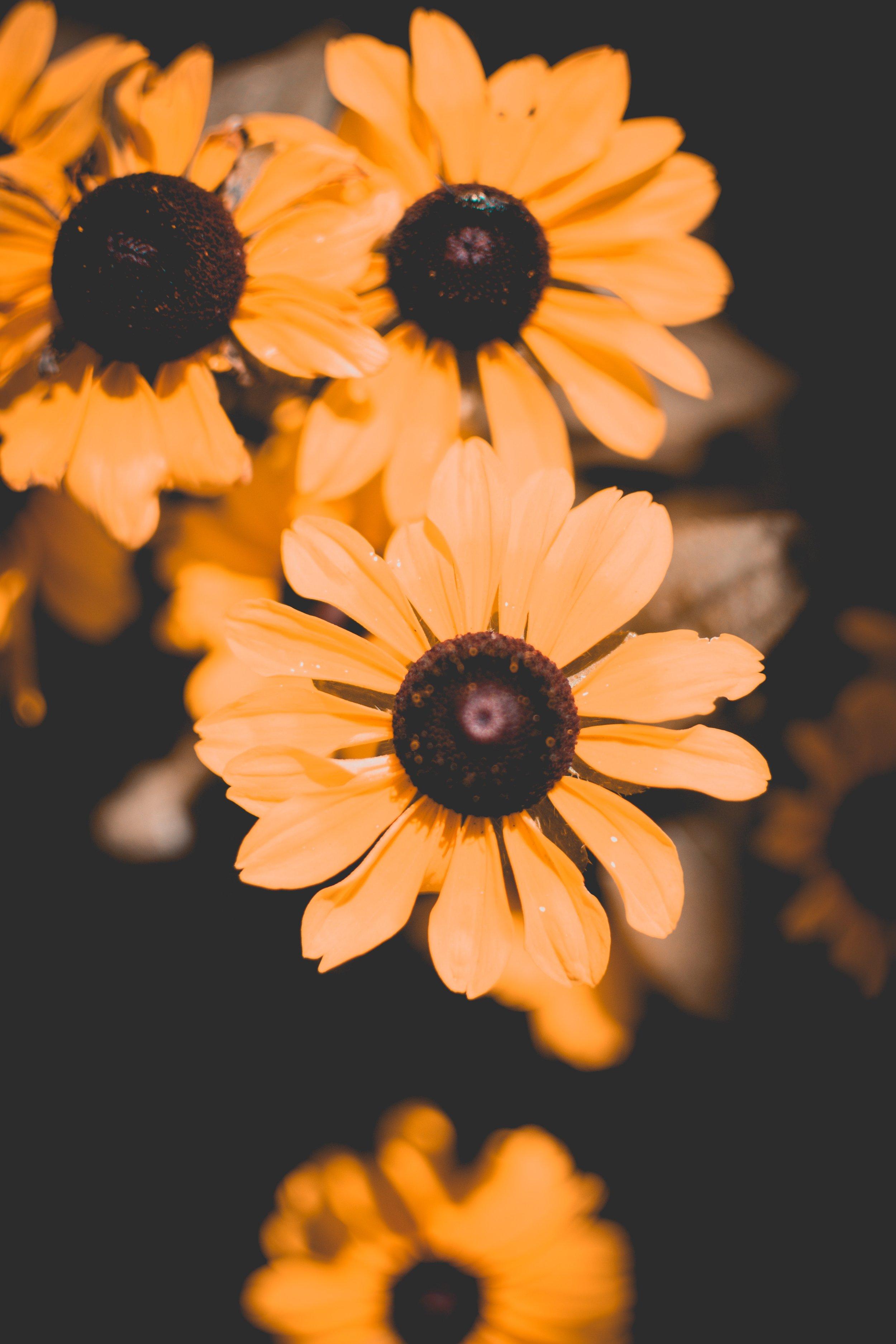 beautiful-beautiful-flowers-blooming-1275603.jpg