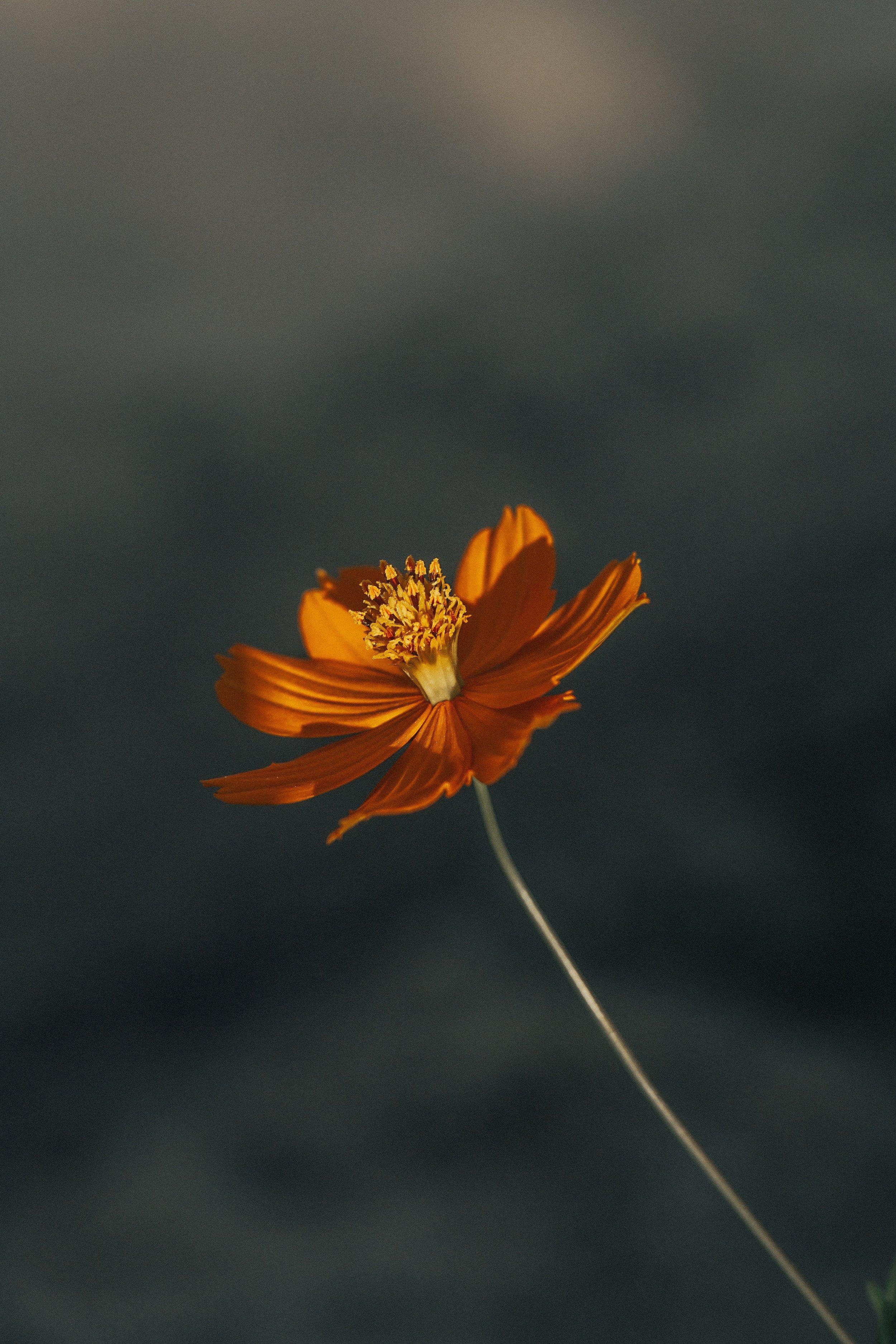 beautiful-bright-close-up-1781945.jpg