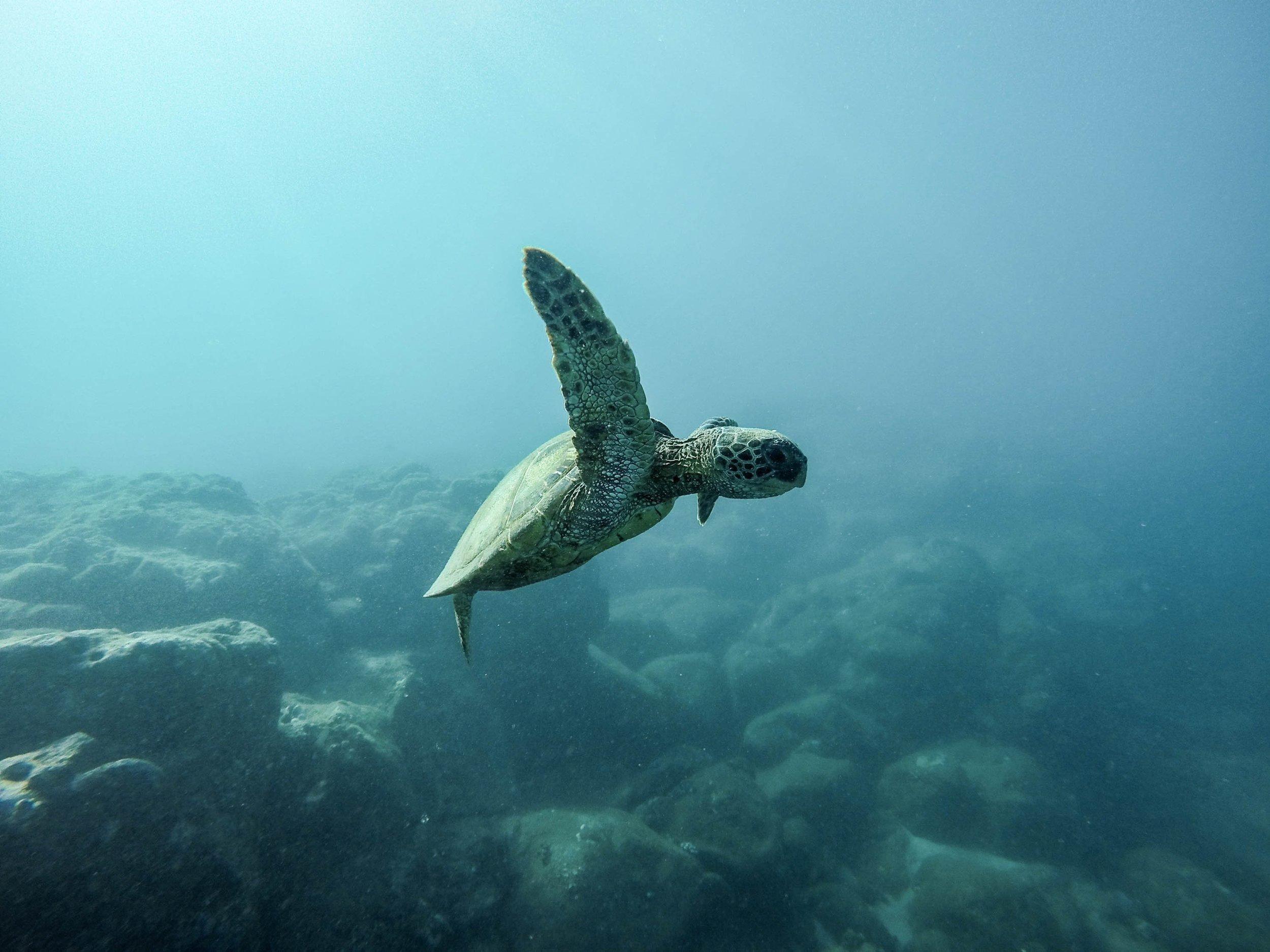 animal-animal-photography-aquatic-2422913.jpg