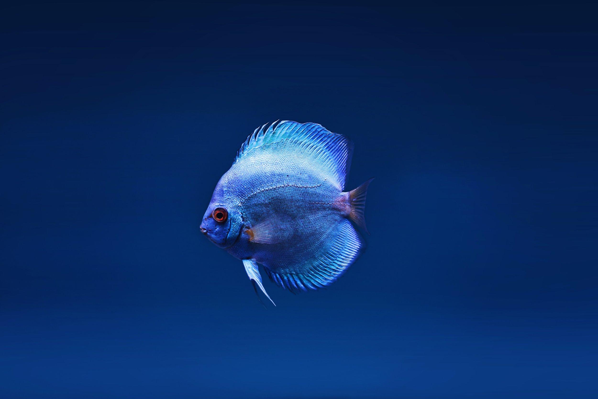 animal-aquatic-aquatic-animal-2156311.jpg