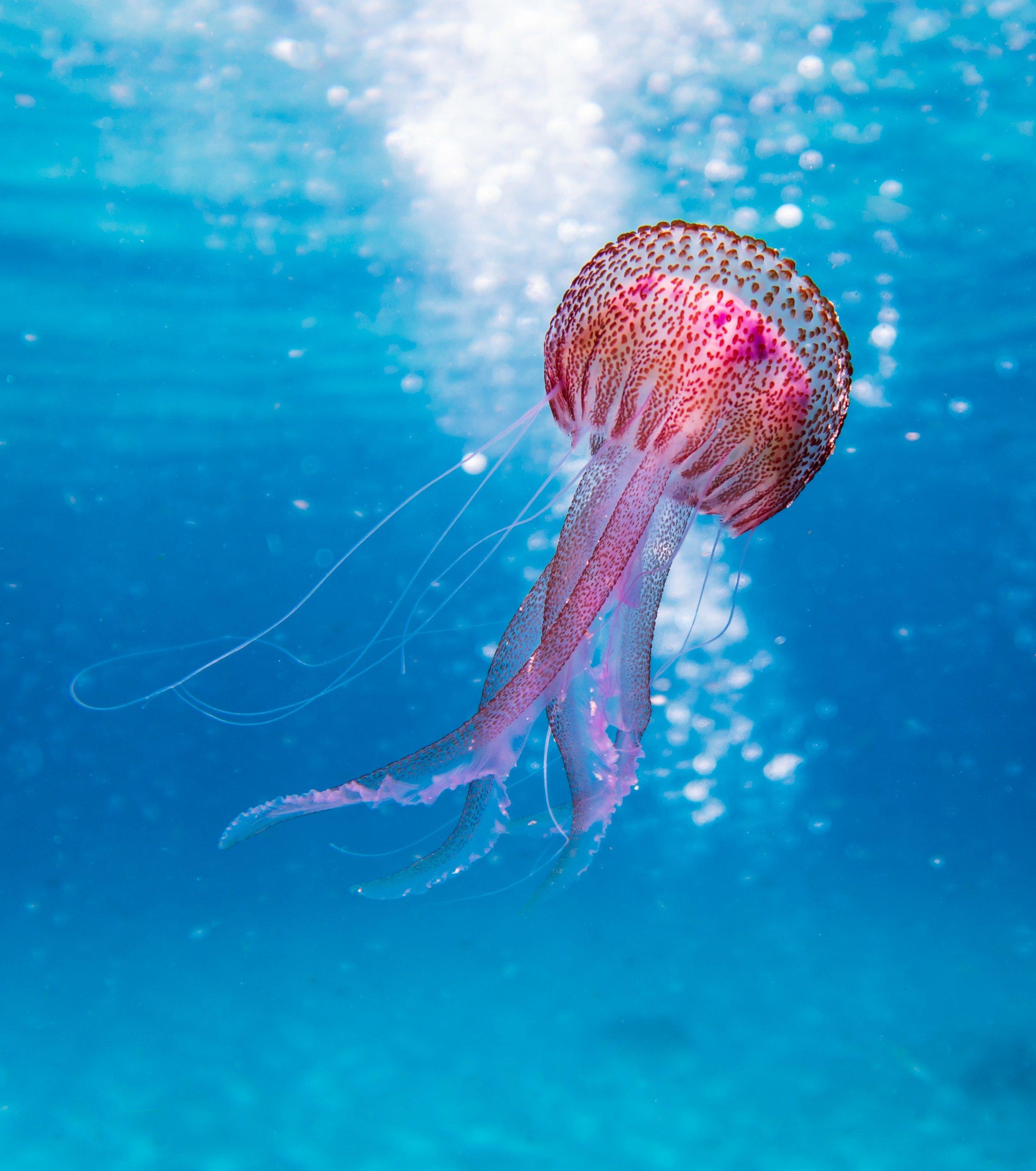 animal-aquatic-biology-1076758.jpg