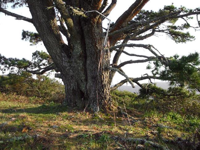 ts_tree1.jpg