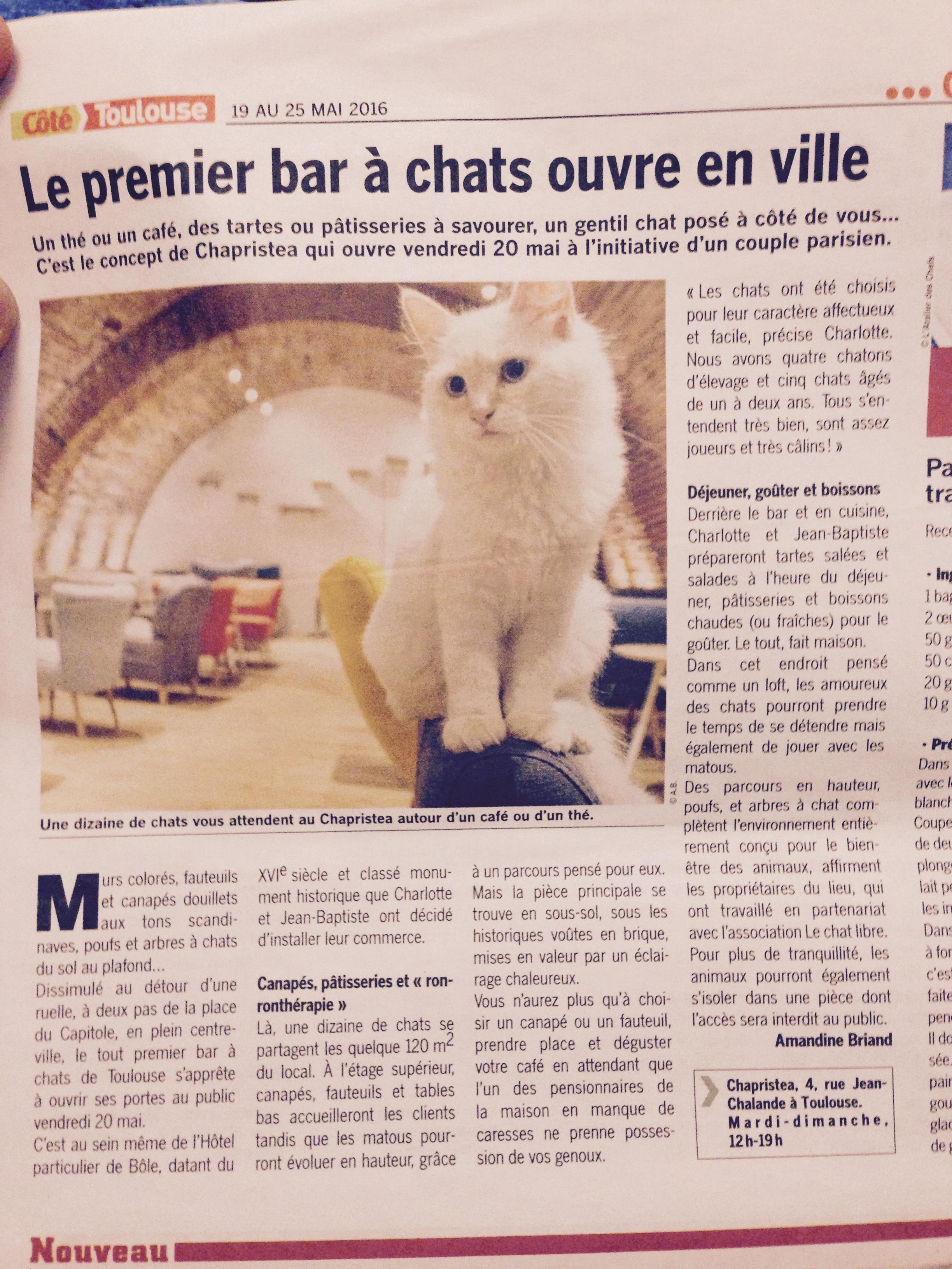 Le premier bar à chat !