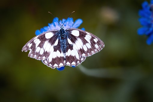 butterfly-1585728__340.jpg