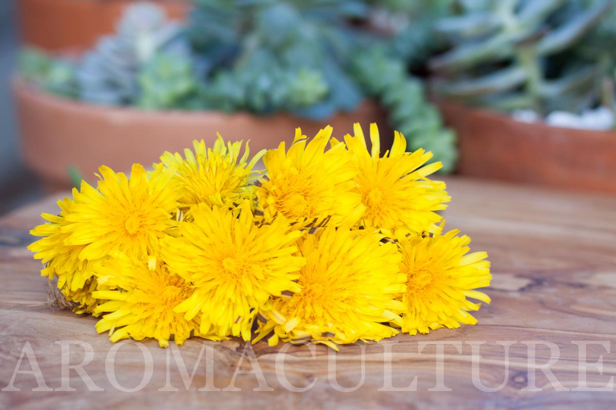 erin stewart of aromaculture.com-92.jpg
