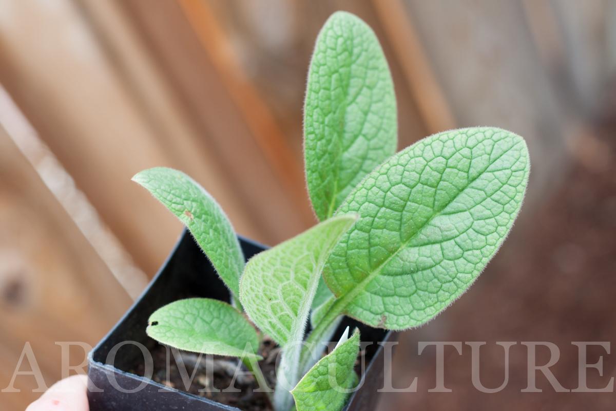 aromaculture.com photo by Erin Stewart wm-5.jpg