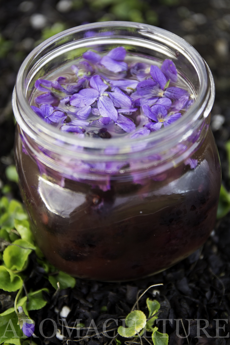 violets by erin stewart of aromaculture.com wm-50.jpg