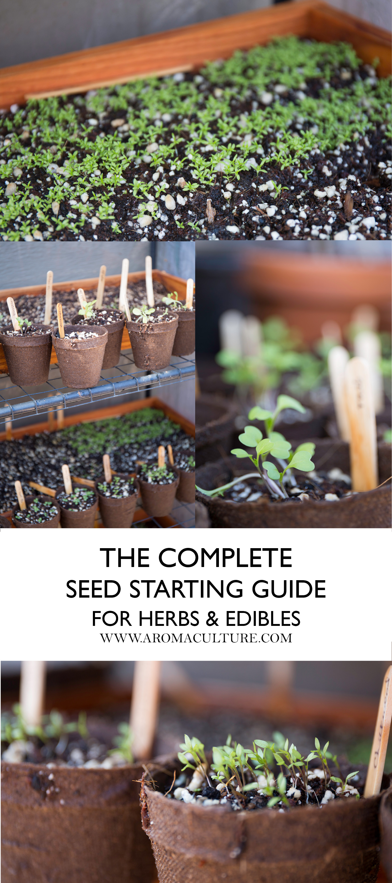 COMPLETE SEED STARTING GUIDE FOR HERBS AND EDIBLES AROMACULTURE.jpg