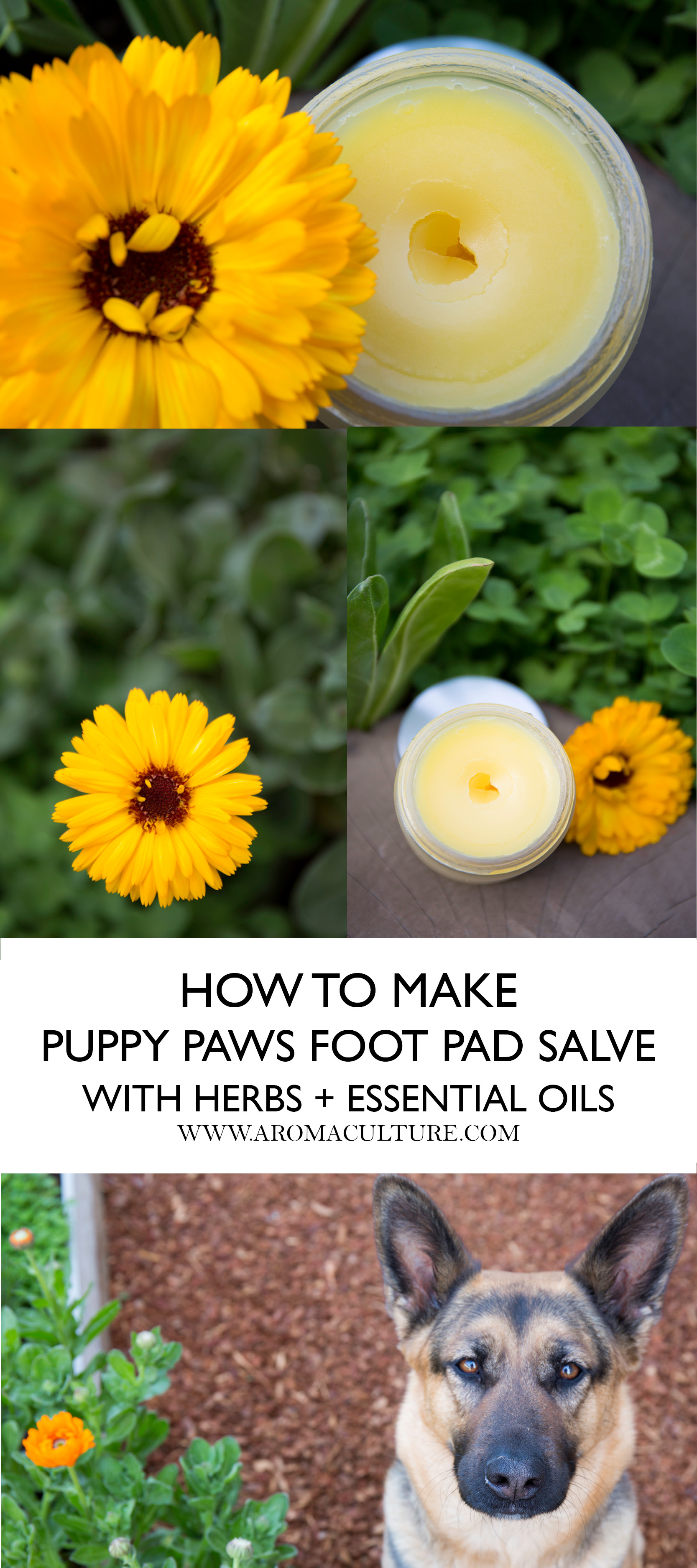 HOW TO MAKE PUPPY PAWS FOOT PAD SALVE AROMACULTURE.jpg