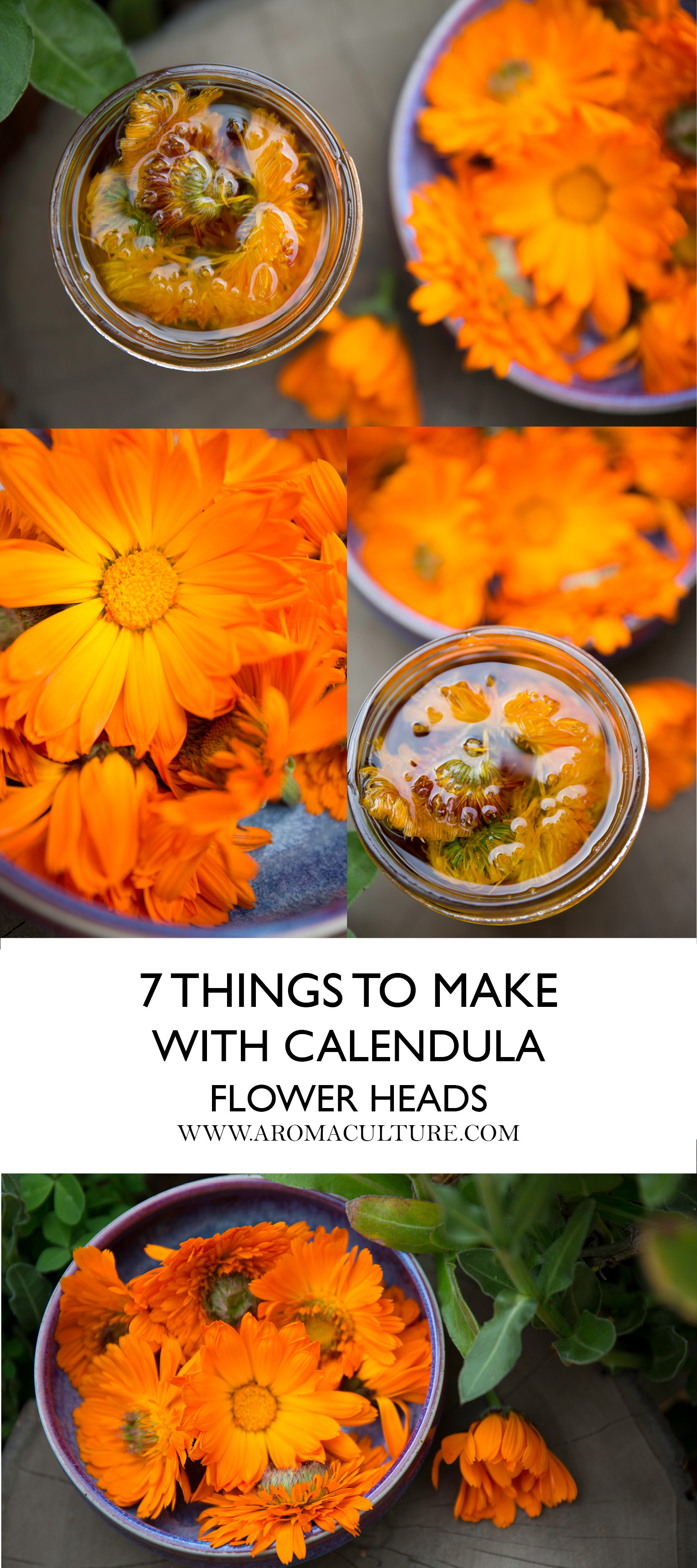 7 THINGS TO MAKE WITH CALENDULA FLOWER HEADS.jpg