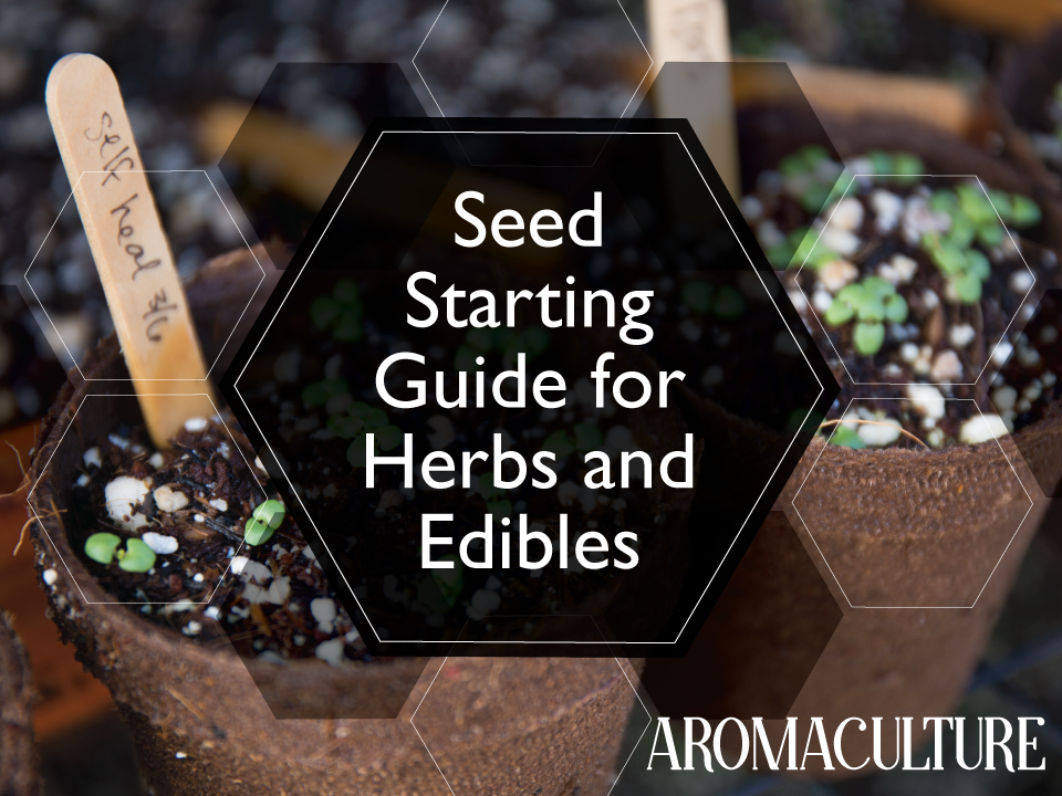 complete-seed-starting-guide-for-herbs-and-edibles-aromaculture.png