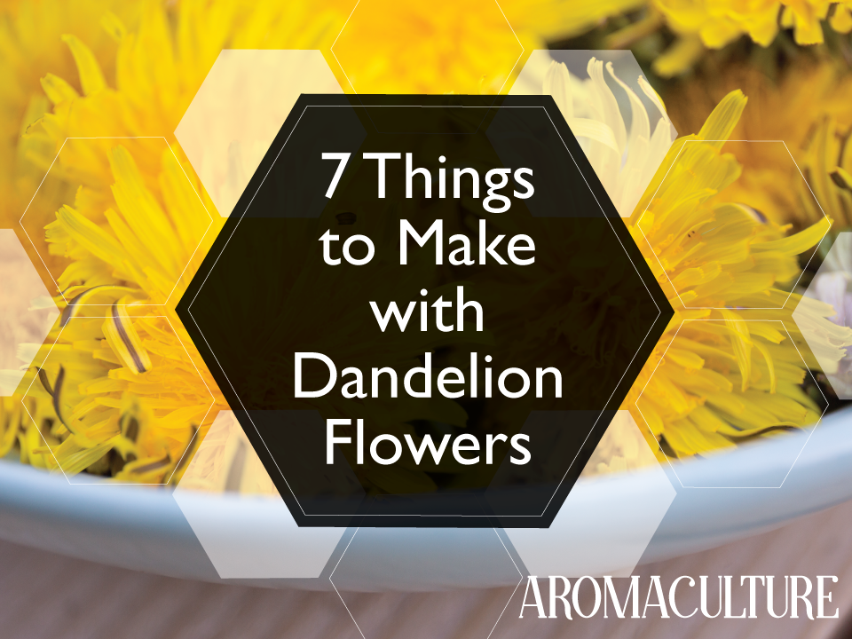 7-things-to-make-with-dandelion-flowers-aromaculture.png