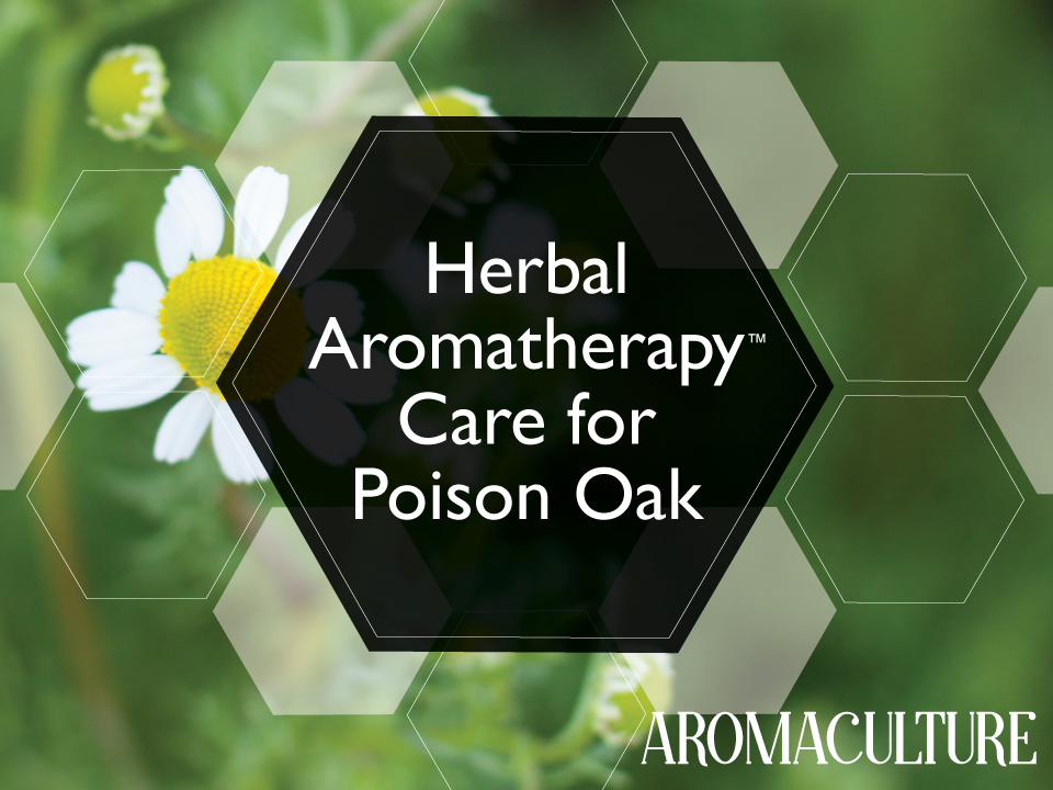herbal-aromatherapy-care-for-poison-oak.png