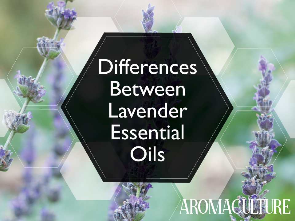 differences between lavender essential oils aromaculture.com 2.png