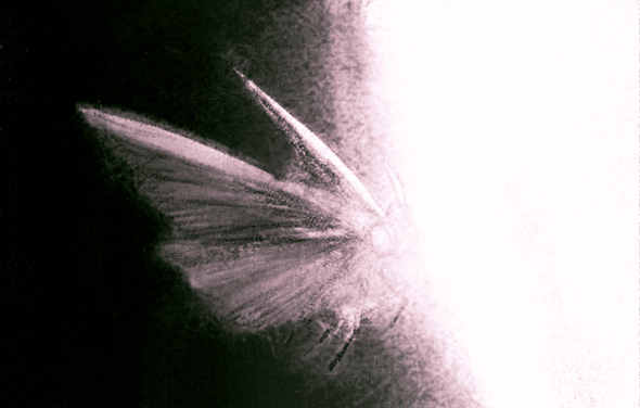MojoWang_Moth_3.jpg