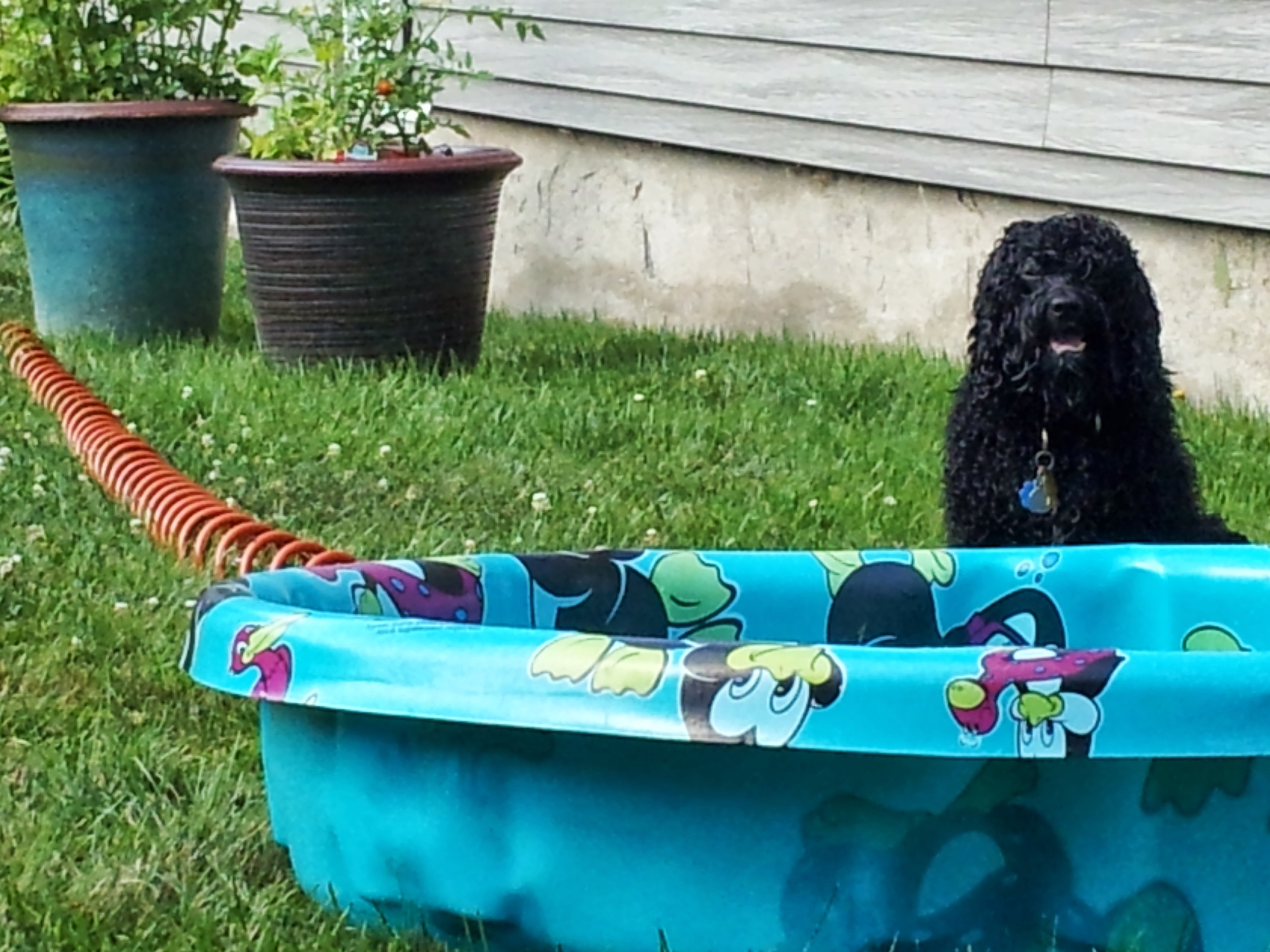 Bailey loves her pool time!