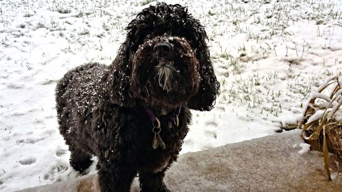 Bailey, My Snow Bunny