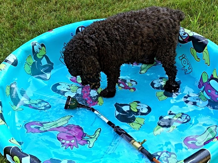 Bailey Loved Her Pool Time.
