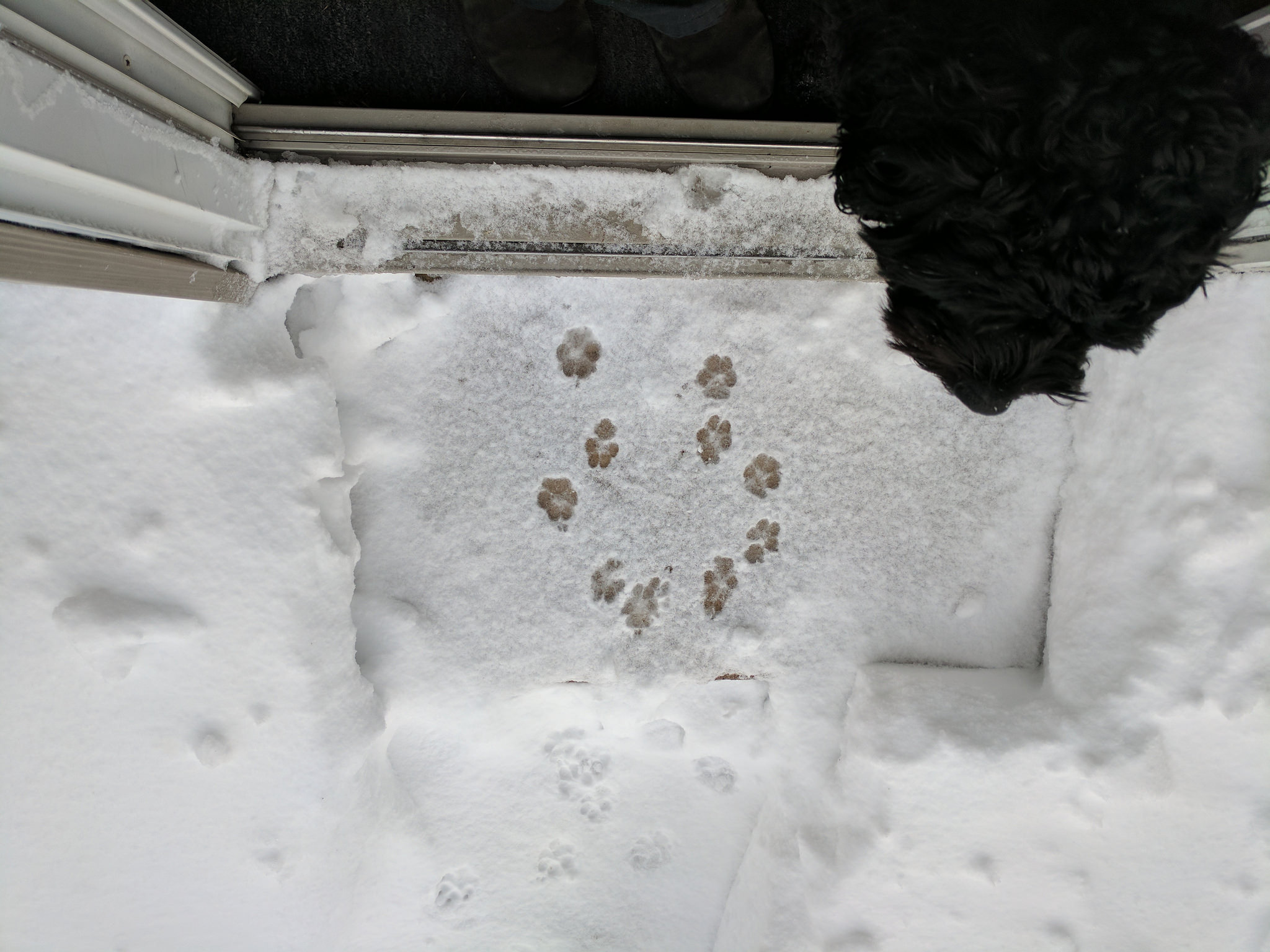 Puppy paw prints in the snow.