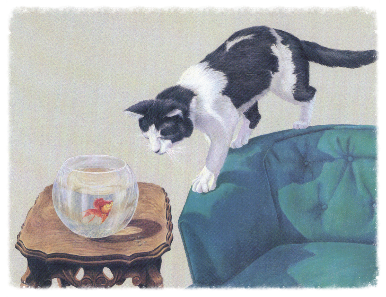 Me, Thomas Beckett, THE original six-toed cat.